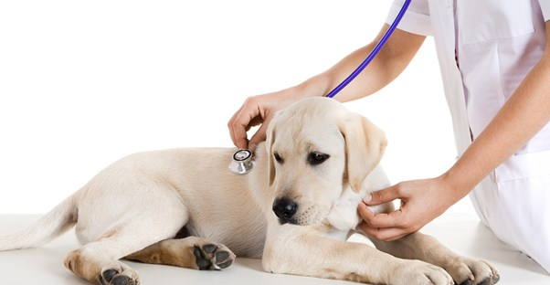 the pros and cons of a vet tech career, Human Body