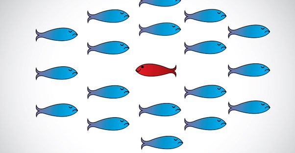 One red fish swims the opposite way of a school of blue fish