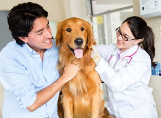 people who followed five tips for a successful vet tech career