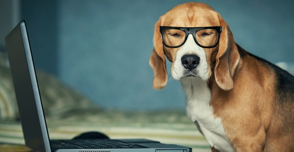 7 Reasons Every Office Should Be Pet-Friendly